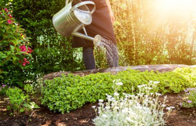 https://dailymagazines.net/6-great-tips-for-gardening-in-your-garden/